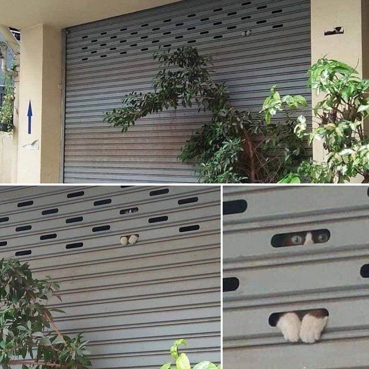 gatos-observan