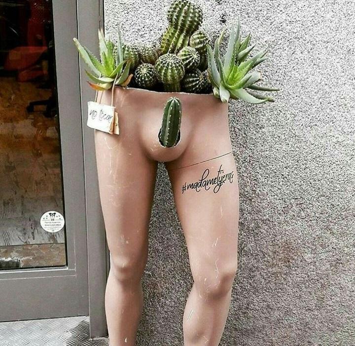 macetero-para-cactus