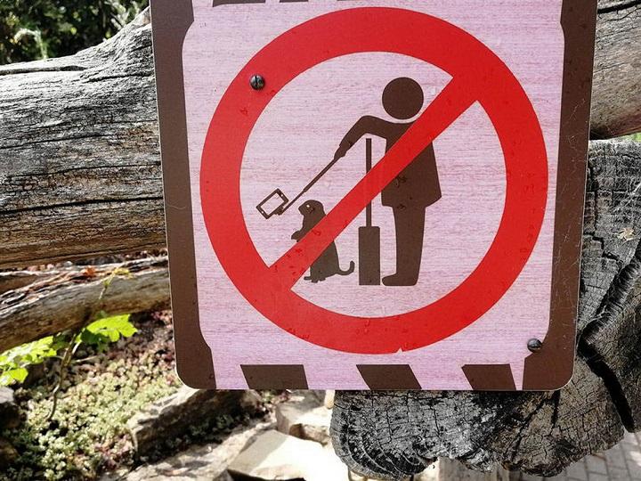 prohibido-hacerse-selfies-con-los-animales
