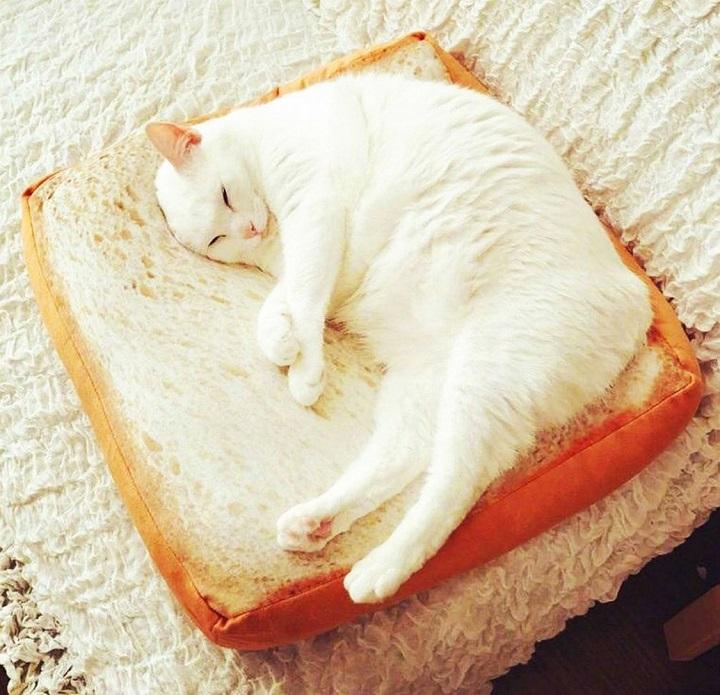 cama-pan-de-molde-gatos
