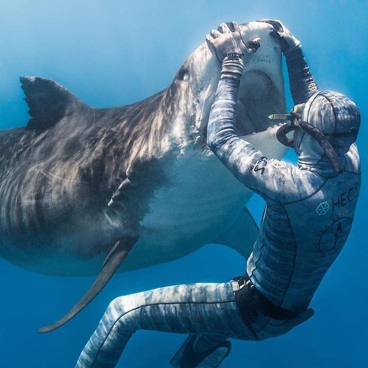 dentista-de-tiburones