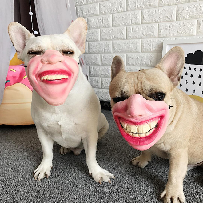 mascaras-humanas-perros