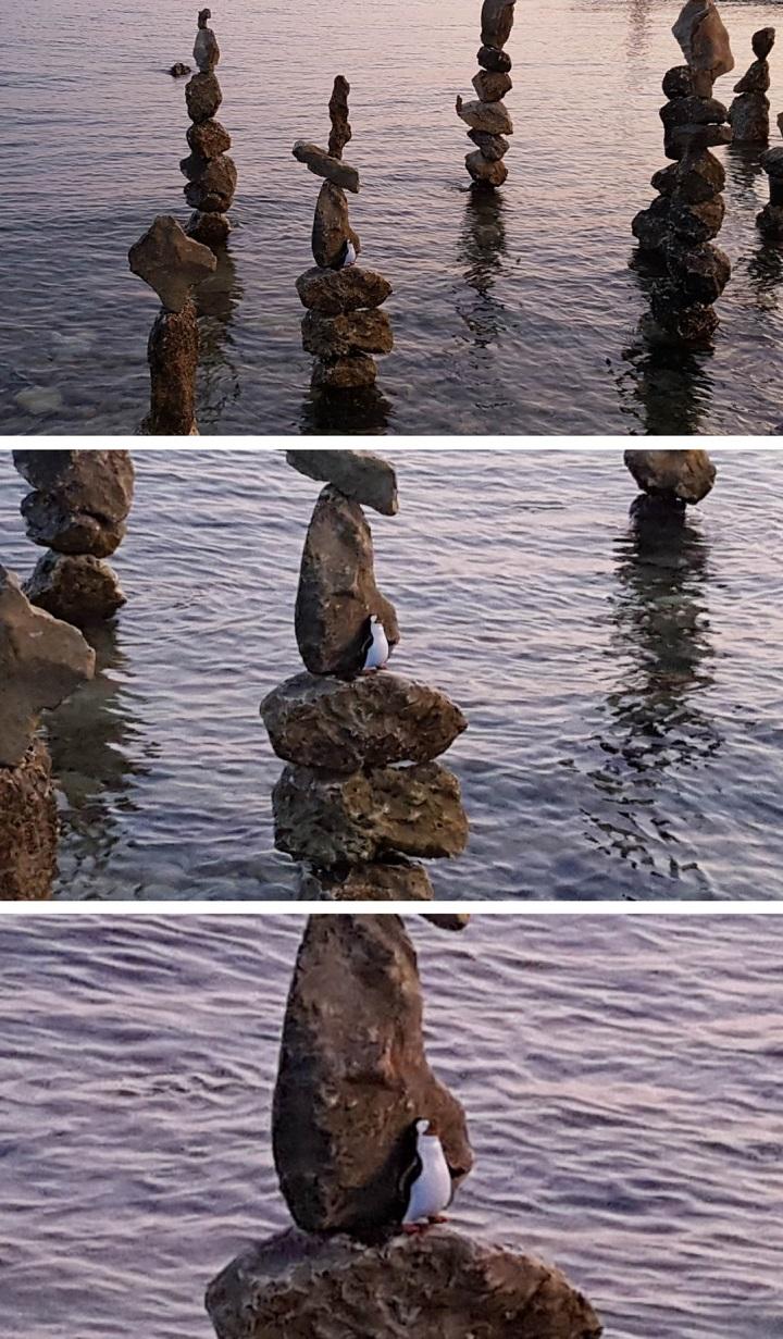 51 Peliculas Porno Hay Un Pinguino En El Ascensor ping�ino escondido   3memes