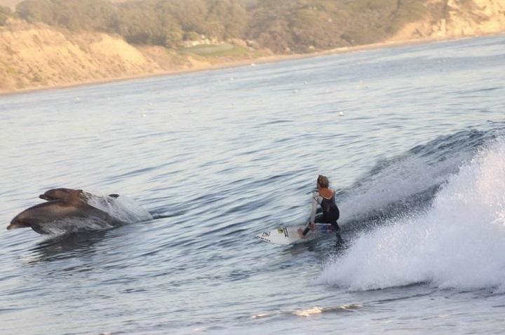 surfeando-con-los-delfines