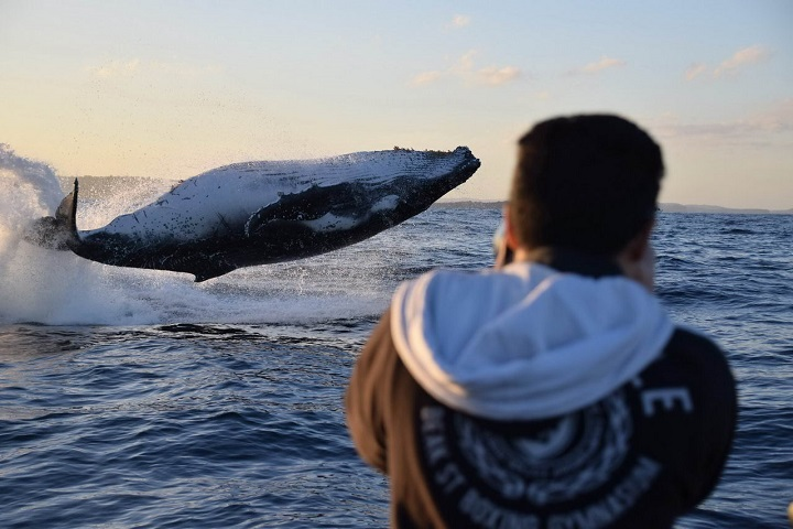 ballena-en-pleno-vuelo