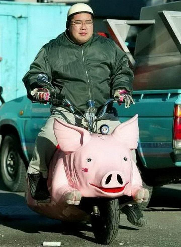 cerdocicleta