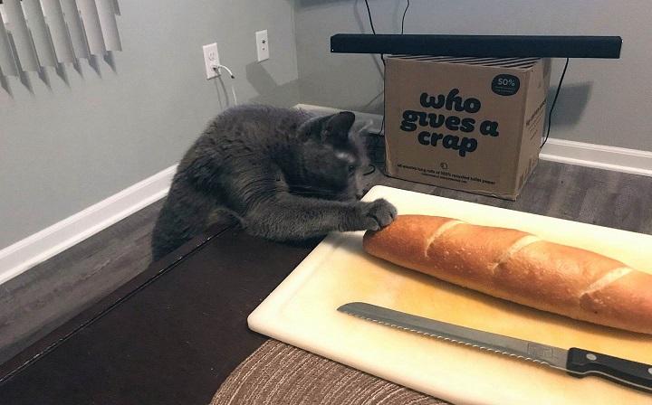 gato-bocata
