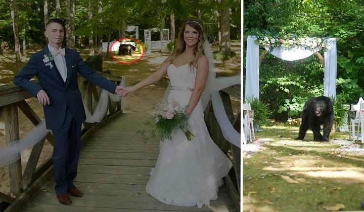 oso-irrumpiendo-en-plena-sesion-de-fotos-de-una-boda