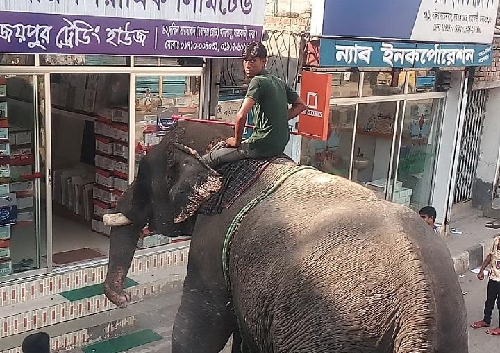 a-comprar-en-elefante