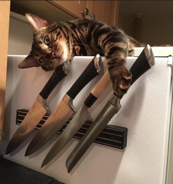 los-gatos-son-peligrosos