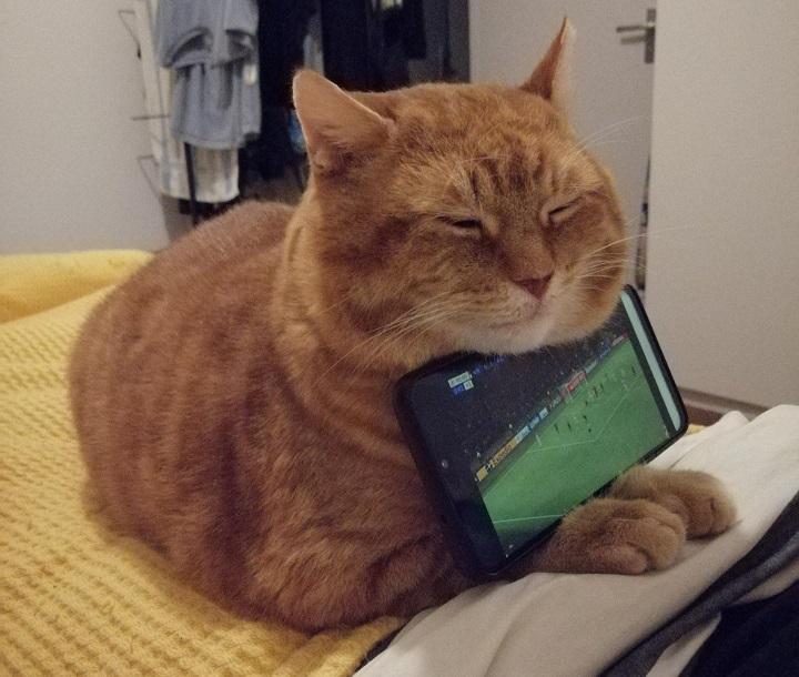 gato-como-soporte-del-movil
