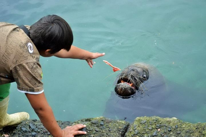 leon-marino-de-suerte