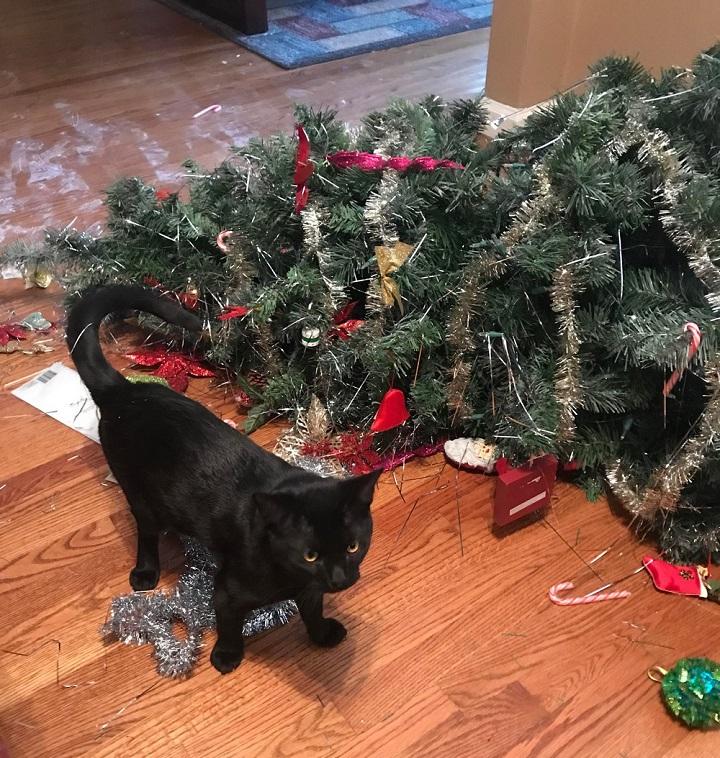 los-gatos-y-la-Navidad