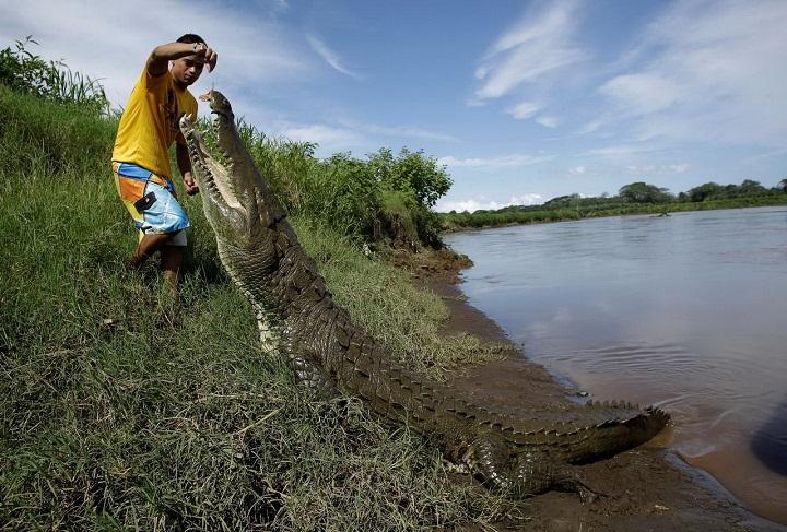 dando-de-comer-a-los-cocodrilos