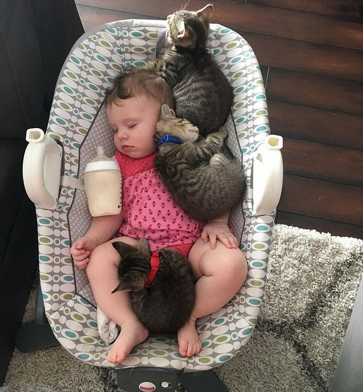 gatos-acurrucados