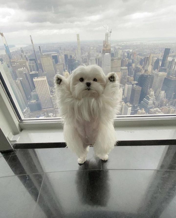 perro-posando-para-la-foto