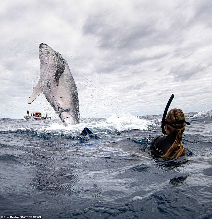 buceando-entre-ballenas