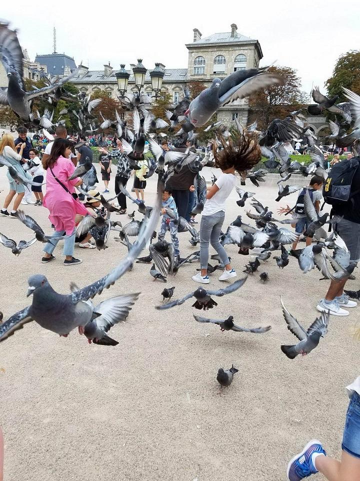 palomas-al-ataque