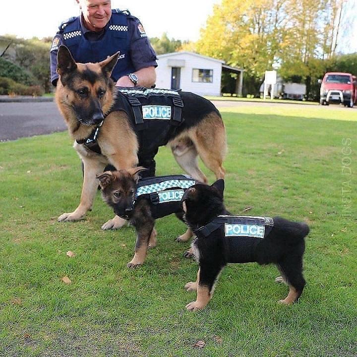 cachorros-de-la-policia