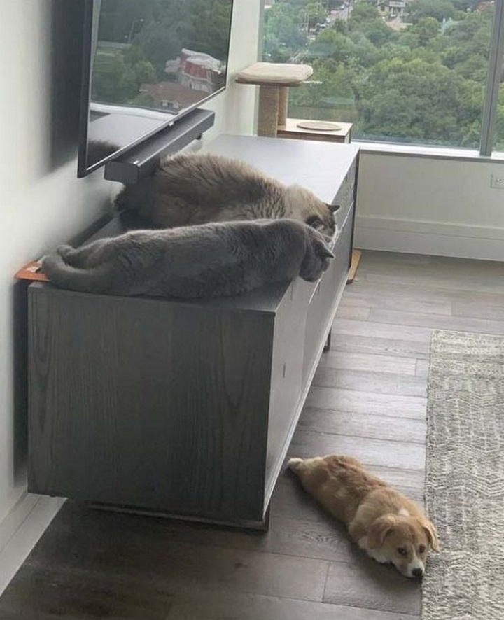 gatos-al-poder
