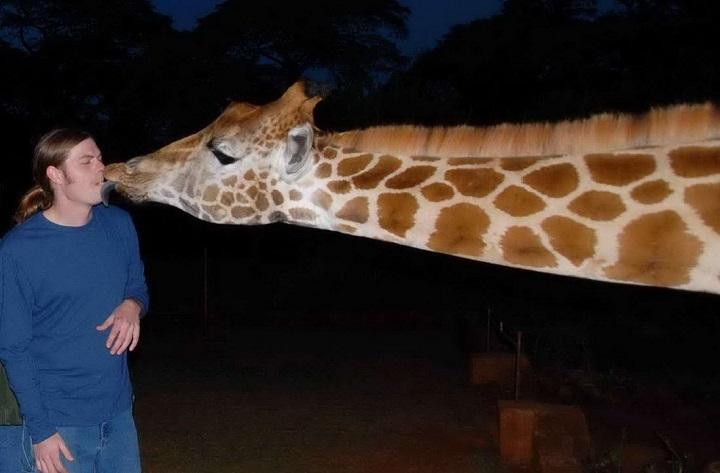 morreo-de-jirafa