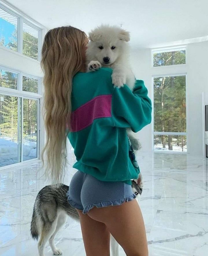 perro-muy-bonito
