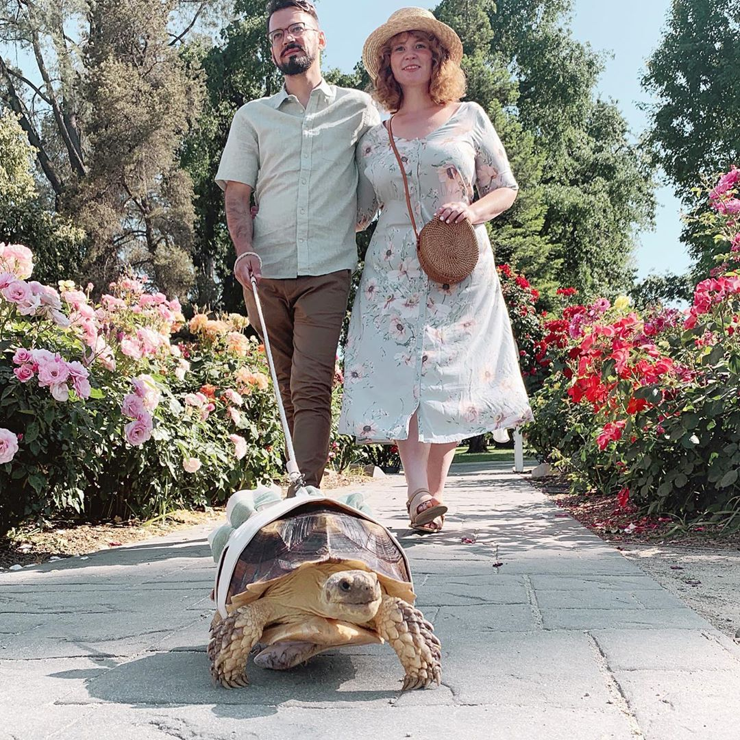 tortuga-paseando